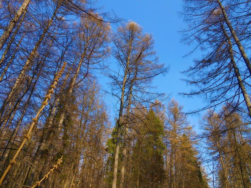 Le temps clair de marge de forêt au printemps images libres de droits