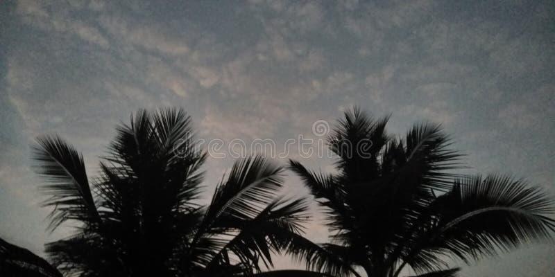 Le temps de matin l'arbre et le ciel photographie stock