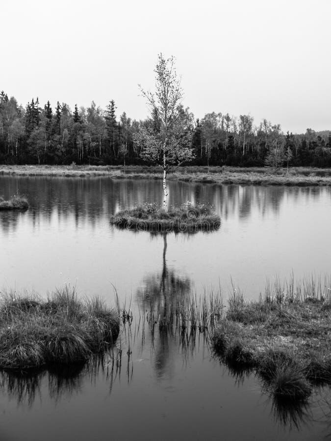 Le temps de soirée chez Chalupska amarrent le lac près de Borova Lada, montagnes de Sumava, République Tchèque, l'Europe photos stock