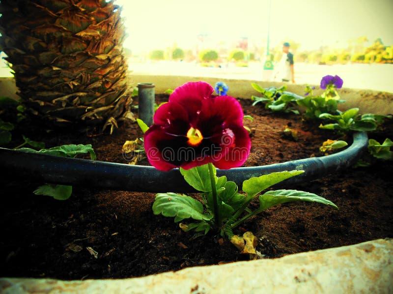 Le texure coloré d'une fleur image libre de droits