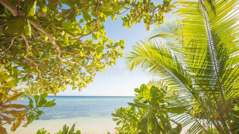 Le thème tropical Nature exotique de l'Asie philippines Palmiers donnant sur la mer images stock