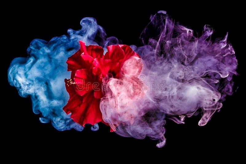 Le thé rouge créatif s'est levé fleur en nuages photo stock