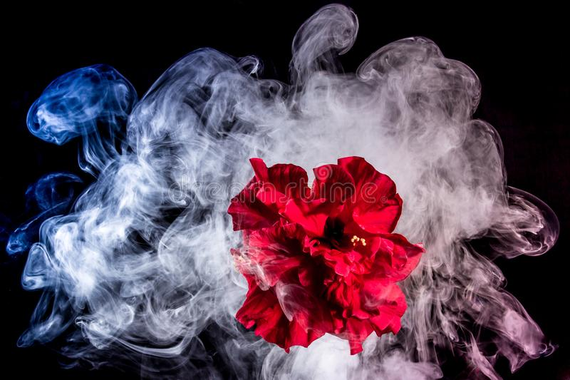 Le thé rouge créatif s'est levé fleur en nuages photos stock