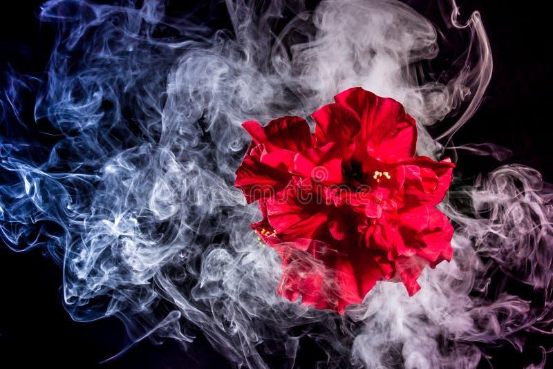 Le thé rouge créatif s'est levé fleur en nuages photo libre de droits