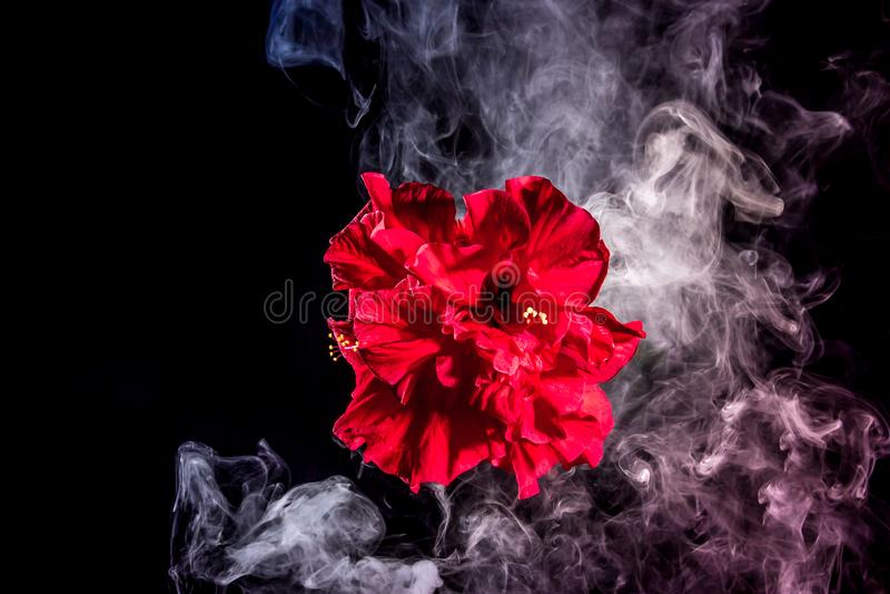 Le thé rouge créatif s'est levé fleur en nuages photographie stock libre de droits