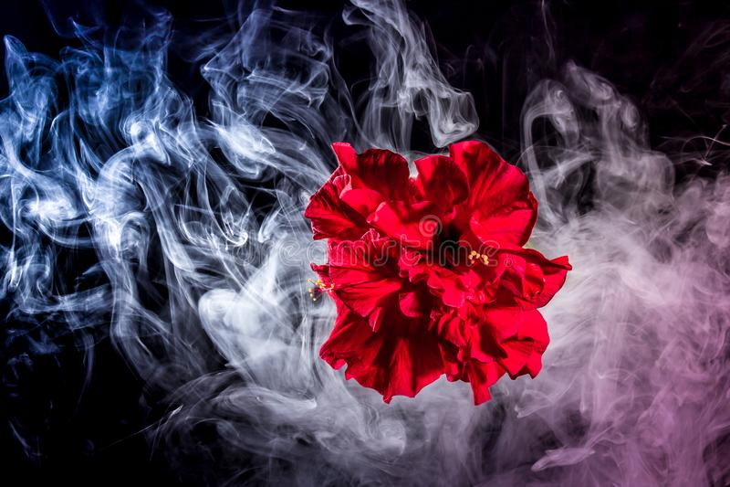 Le thé rouge créatif s'est levé fleur en nuages photos libres de droits