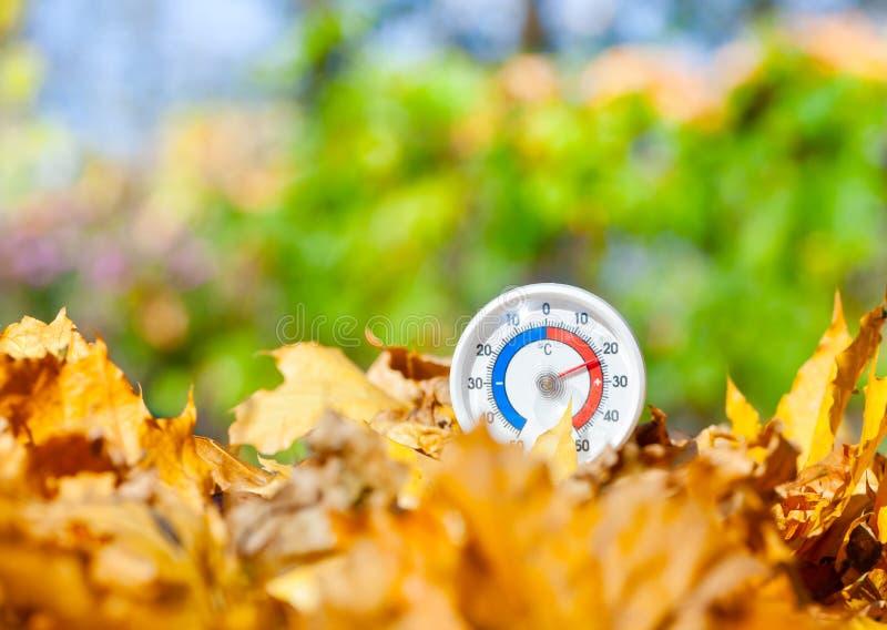 Le thermomètre extérieur dans des feuilles d'or d'érable montre le temperatur chaud photo stock