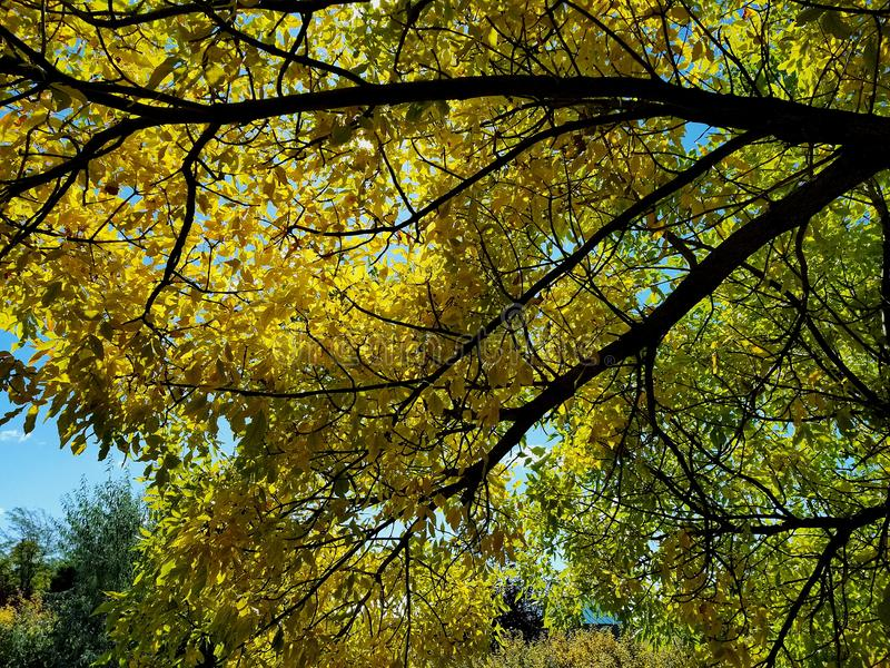 Le thro de ciel les feuilles et les branches tombent photographie stock