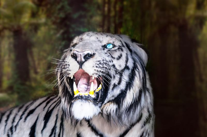 Le tigre blanc baîlle sur le fond vert de feuillage image libre de droits