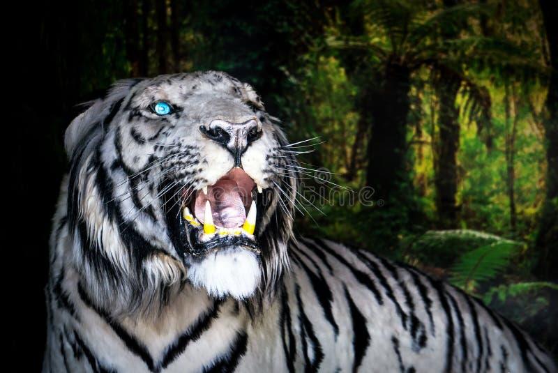 Le tigre blanc baîlle sur le fond vert de feuillage photos libres de droits