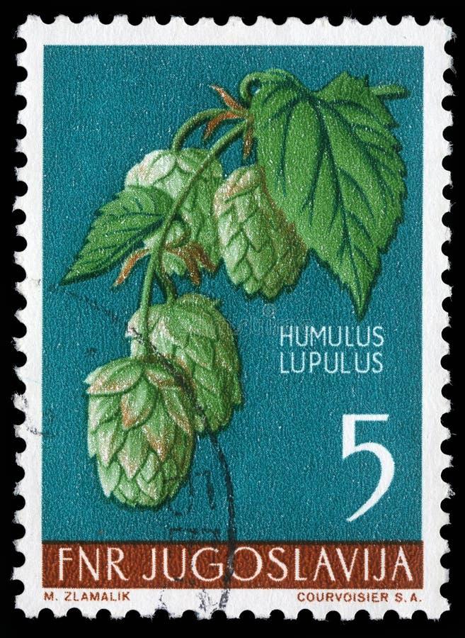Le timbre imprimé en Yougoslavie montre l'houblon commun image libre de droits