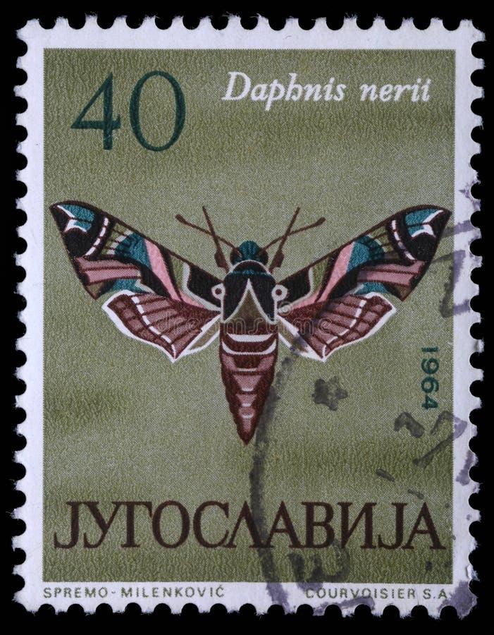 Le timbre imprimé en Yougoslavie montre le papillon image stock
