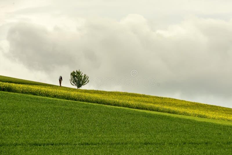 Le tombeau de bord de la route et la graine de colza de floraison proche d'arbre solitaire mettent en place dedans image libre de droits