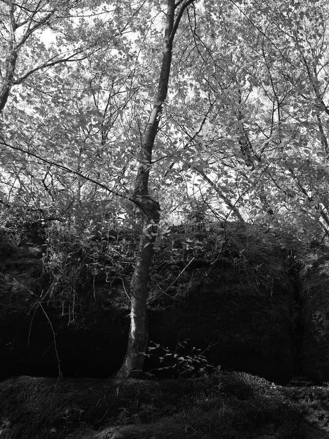 Le tonnerre bascule au parc d'?tat d'Allegany noir et blanc photos libres de droits