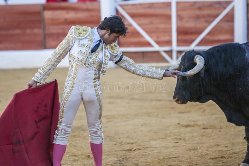 Le toréador espagnol Curro Diaz saluant le public avec le son images libres de droits