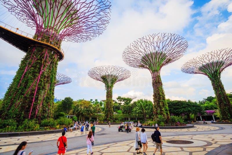 Le touriste non identifié a visité le supertree des jardins par la baie à images libres de droits