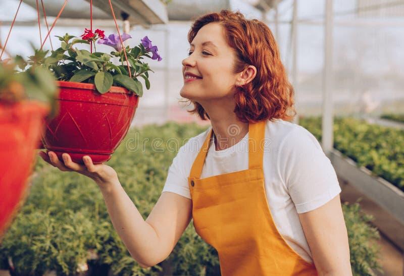 Le trädgårdsmästaren som luktar blommor i drivhus arkivbilder