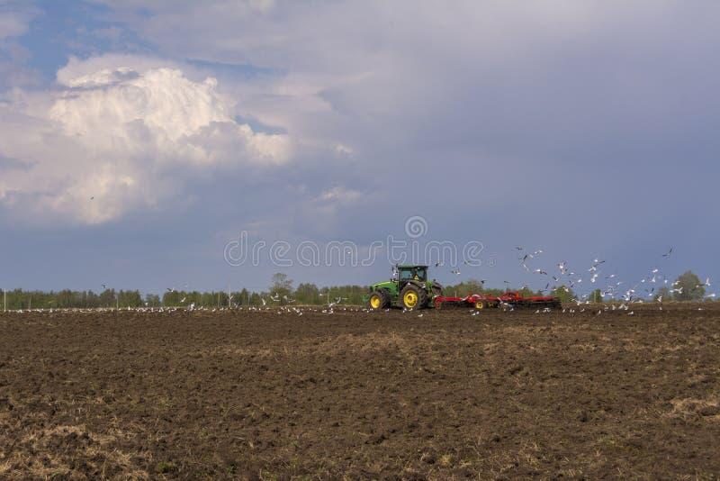 Le tracteur laboure le champ Une vol?e des oiseaux entourant au-dessus du champ image stock