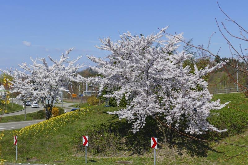 Le trafic d'un cercle dans le B500, conducteurs Baden-Baden avec les arbres de floraison photo libre de droits