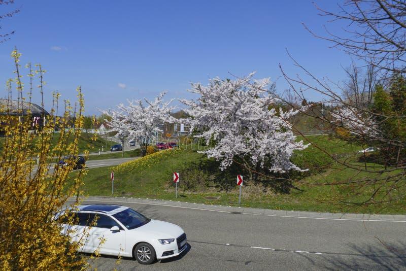 Le trafic d'un cercle dans le B500, conducteurs Baden-Baden avec les arbres de floraison images stock
