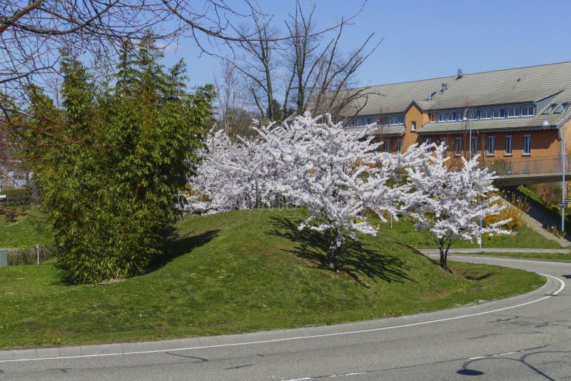 Le trafic d'un cercle dans le B500, conducteurs Baden-Baden avec les arbres de floraison photographie stock