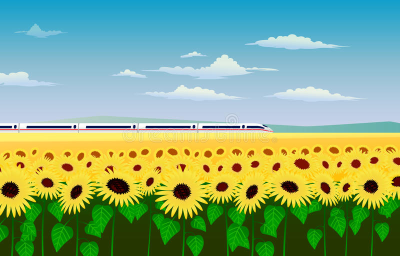Le train à grande vitesse dévalant par un champ des tournesols photo libre de droits