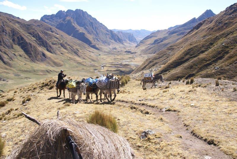 Le train de mule supporte des chargements images stock