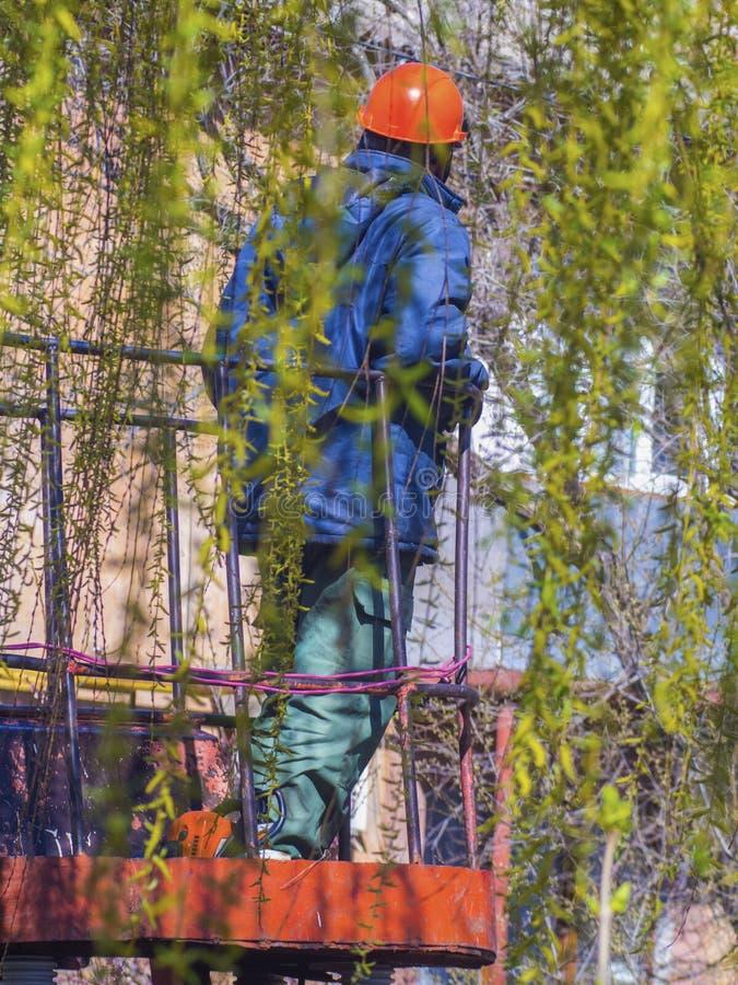 Le travailleur coupe les branches de l'arbre image stock