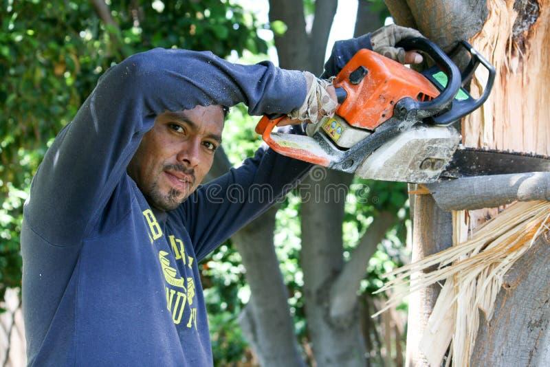 Le travailleur d'arbre scie un membre d'arbre cassé image stock