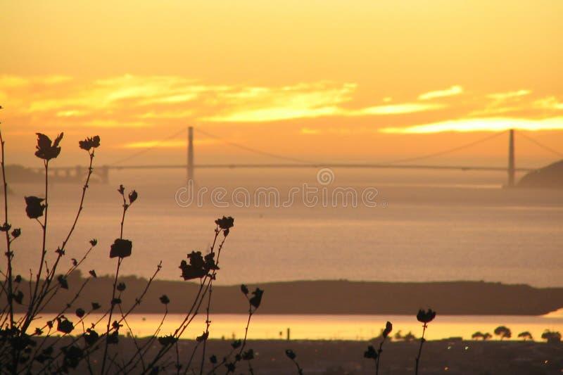Le tree_SF plat bay_Golden la porte   photographie stock
