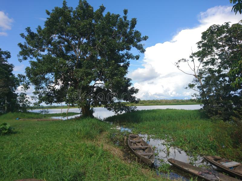 Le tributaire du fleuve Amazone en Indiana Peru photos libres de droits
