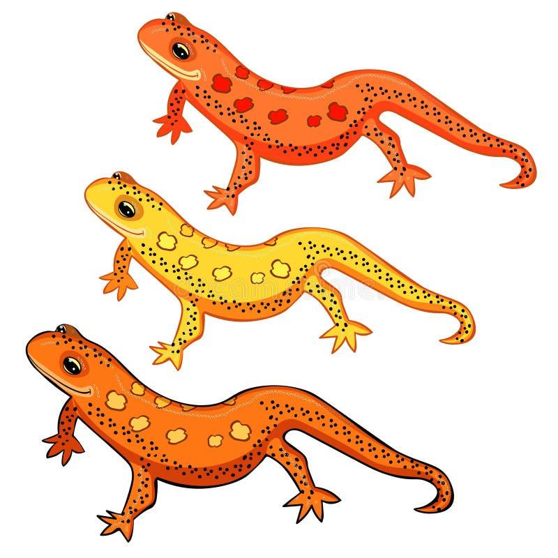 Le Triton östligt amerikanskt rött för prickiga salamander vektor royaltyfri illustrationer