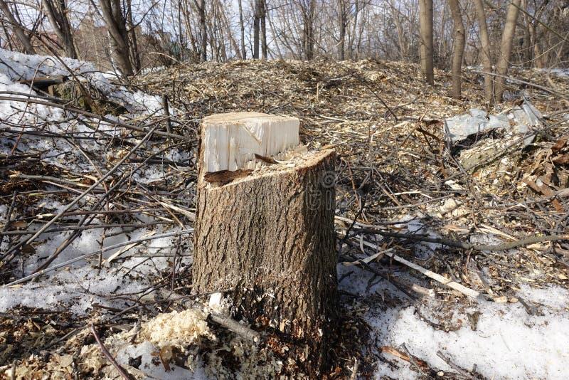 Le tronçon d'un arbre abattu sur le fond des déchets de bois Destruction de nature Concept d'enregistrer la planète image stock