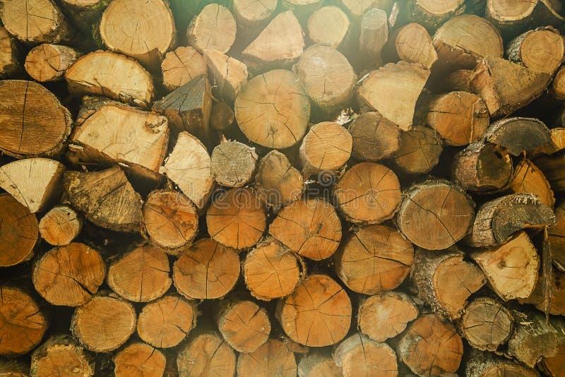 Le tronçon en bois de cercle d'arbre de teck rond cutted le fond de groupe images stock