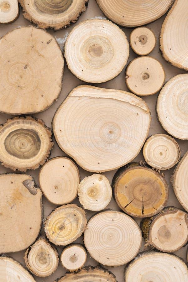 Le tronçon en bois de cercle d'arbre de teck rond cutted le fond de groupe image libre de droits