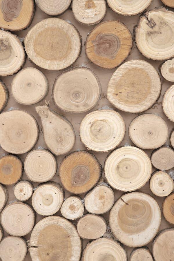 Le tronçon en bois de cercle d'arbre de teck rond cutted le fond de groupe photos libres de droits