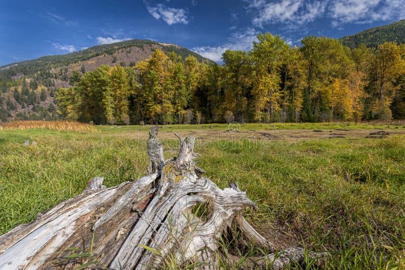 Le tronçon mène aux arbres à l'arrière-plan images stock