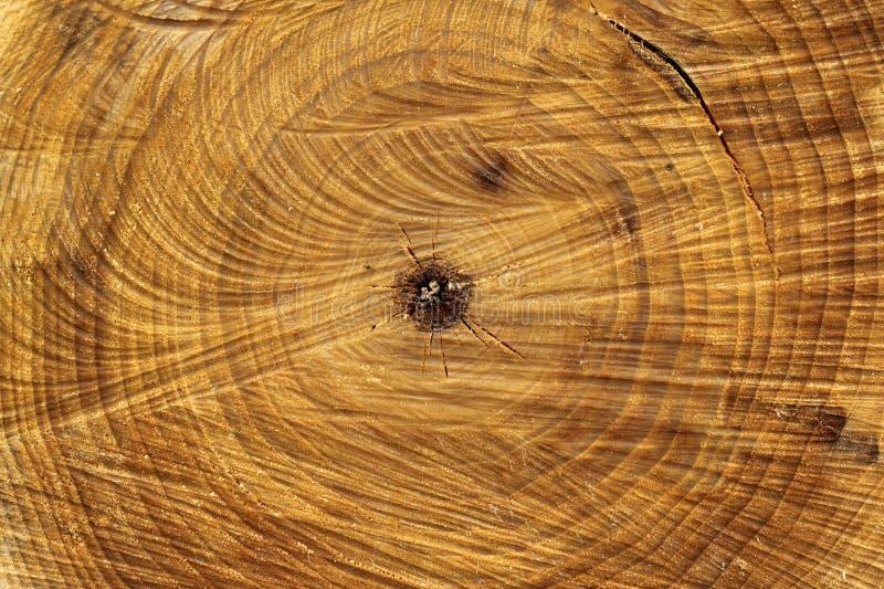Le tronc d'arbre avec des traces de a vu la coupe et a fendu le fond image stock