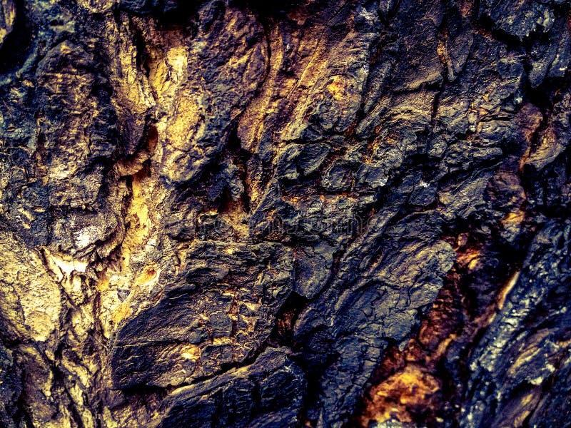 Le tronc d'arbre brûlé a tourné noir et brun photo stock