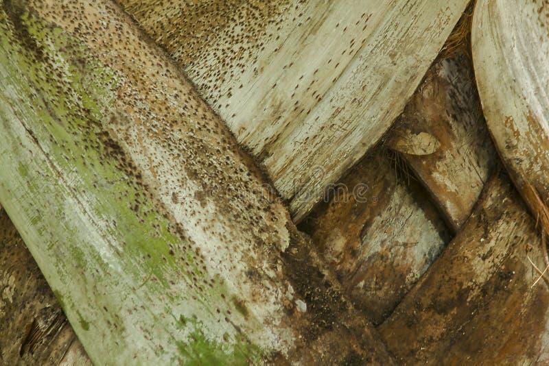 Le tronc supérieur du fond de palmier photos stock