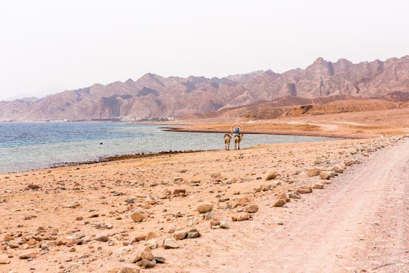 Le trou bleu dans Dahab, Egypte photos stock