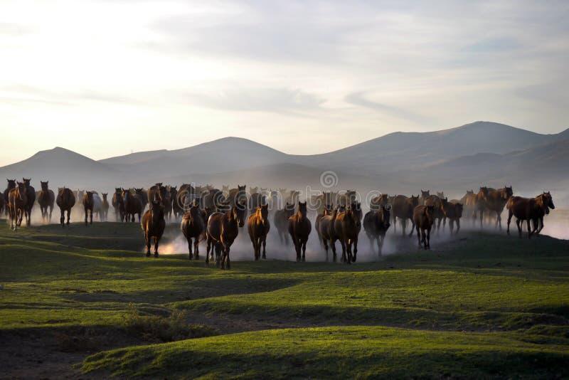 Le troupeau de cheval fonctionnent photos stock