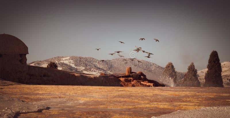 Le troupeau des pigeons jouent dans l'eau photos stock