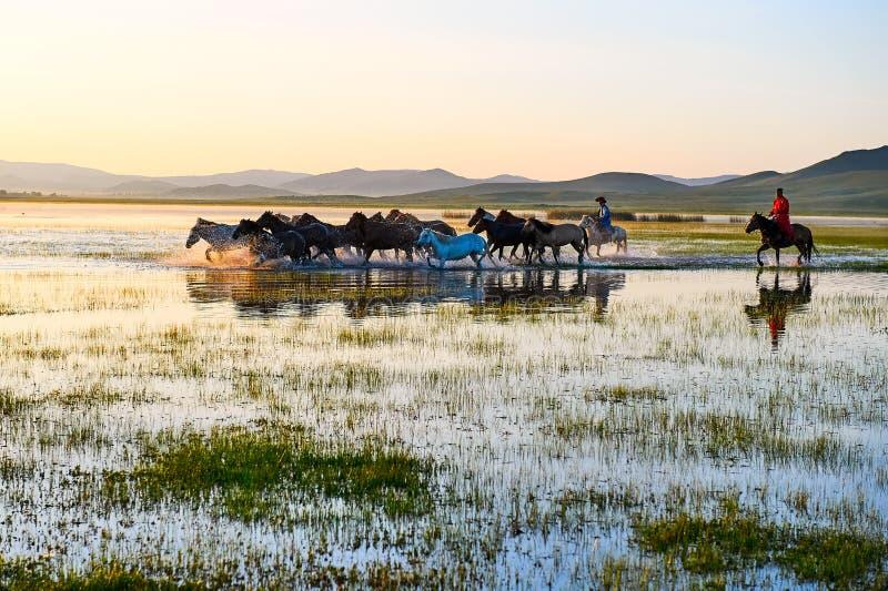 Le troupeau et le manada dans le lever de soleil de l'eau image stock
