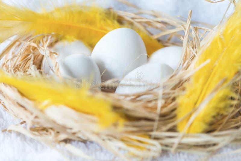 Le uova bianche in uova rivoltano il fieno su un fondo bianco, fine su, isolato immagini stock libere da diritti