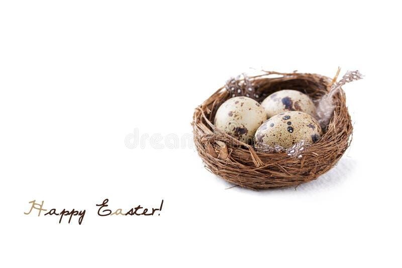 Le uova di quaglia in un nido con le piume ed il salice purulento si ramificano su un fondo bianco per Pasqua immagini stock libere da diritti