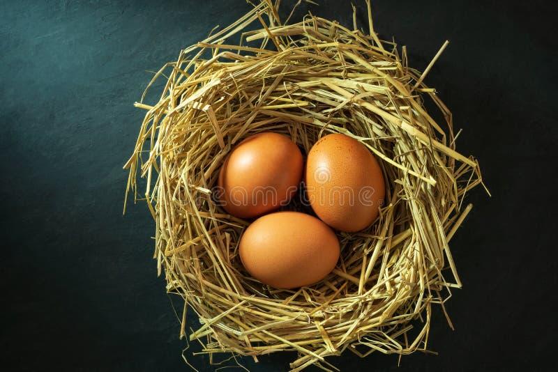 Le uova nel nido fatto di paglia di riso e di luce solare di mattina fotografia stock libera da diritti