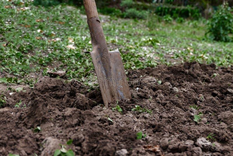 Le vangate della donna di una mano del ` s sporcano e sporcano con una pala Primo piano, Conce fotografia stock