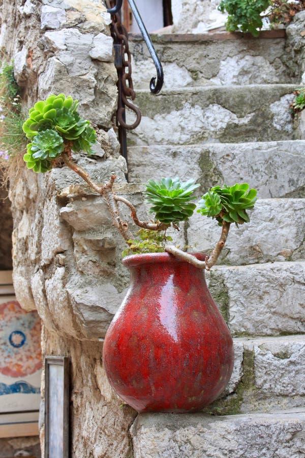 Le vase rouge avec la plante verte se tient sur des étapes lapidées images libres de droits