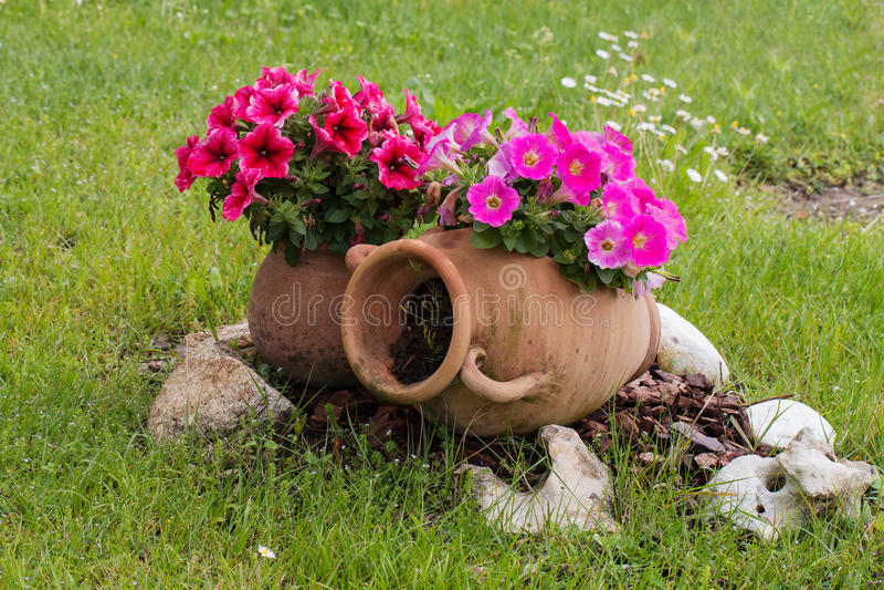 Le vecchie anfore ceramiche con la petunia rosa e rossa for Anfora giardino